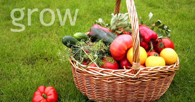 Grow your own food and save money on organic, fresh vegetables